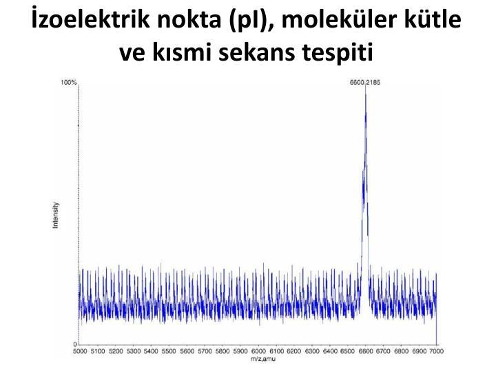 İzoelektrik nokta (pI), moleküler kütle ve kısmi sekans tespiti