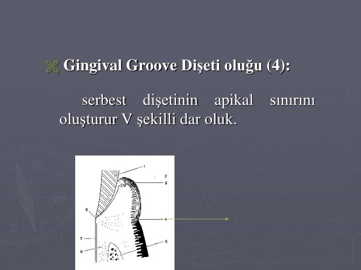 Gingival Groove