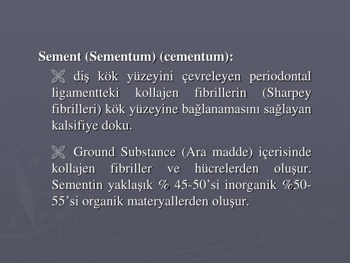 Sement (Sementum) (cementum)