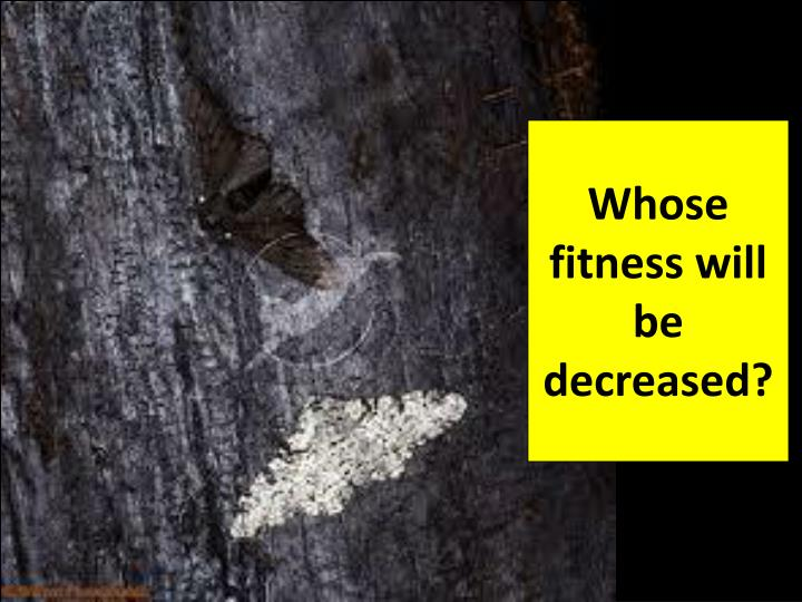 Whose fitness will be decreased?