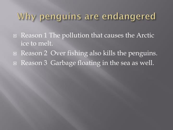 Why penguins are endangered
