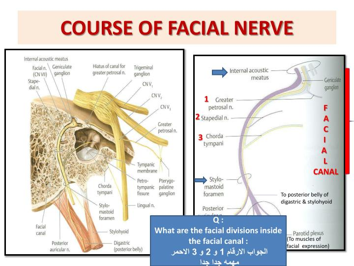 COURSE OF FACIAL NERVE
