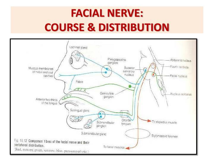 FACIAL NERVE: