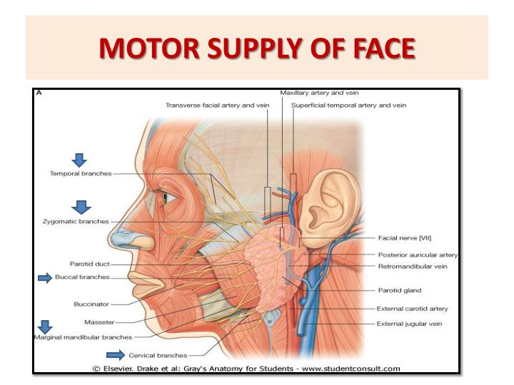 MOTOR SUPPLY OF FACE