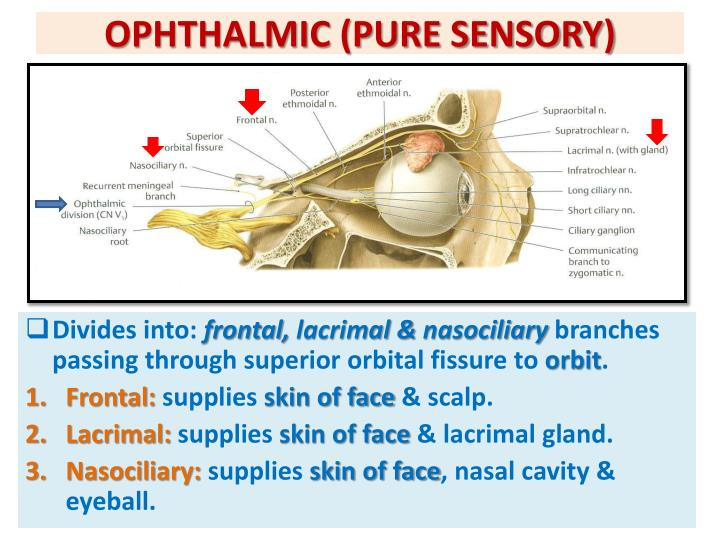 OPHTHALMIC (PURE SENSORY)