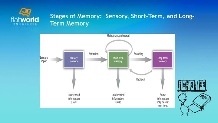 Stages of Memory:  Sensory, Short-Term, and Long-Term Memory