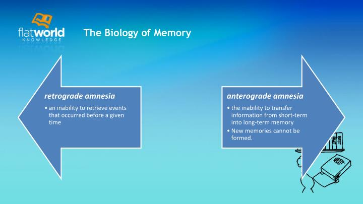 The Biology of Memory