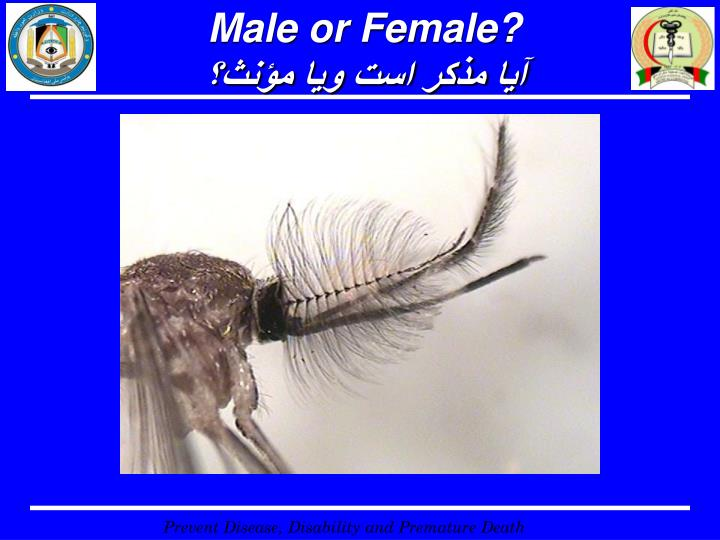 Male or Female?