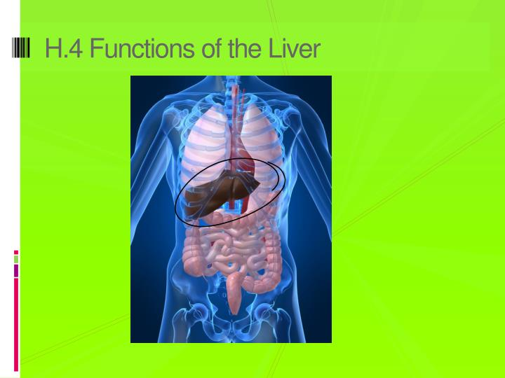 H.4 Functions of the Liver