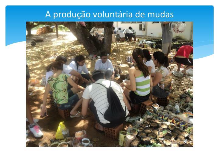 A produção voluntária de mudas