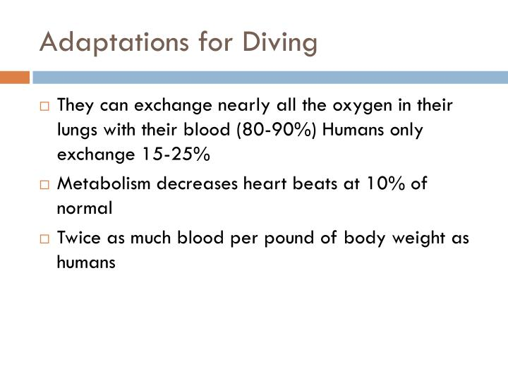 Adaptations for Diving