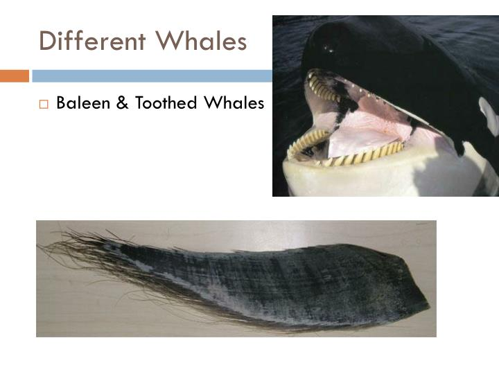 Different Whales