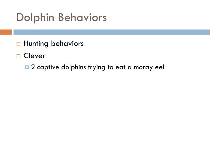 Dolphin Behaviors