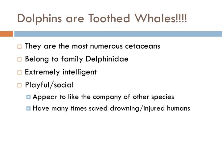 Dolphins are Toothed Whales!!!!