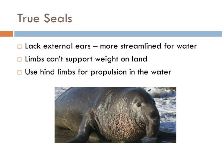 True Seals
