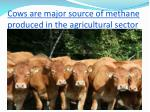 cows are major source of methane produced in the agricultural sector