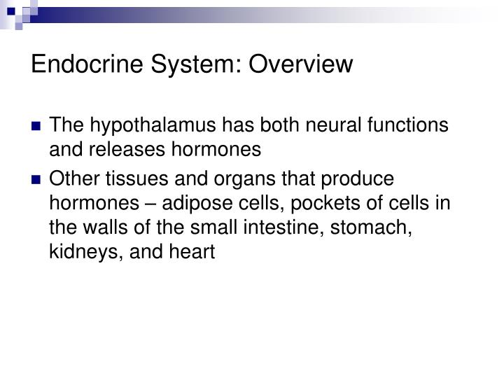 Endocrine System: Overview