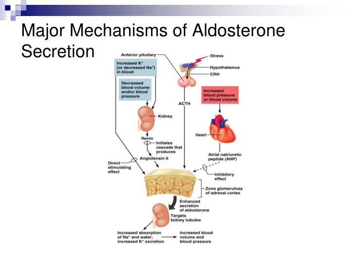 Major Mechanisms of Aldosterone Secretion