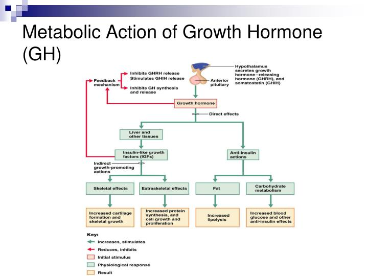 Metabolic Action of Growth Hormone (GH)