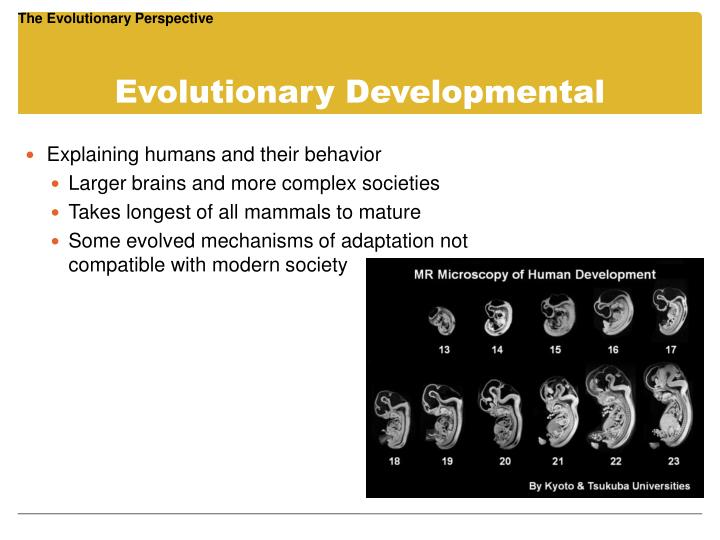 The Evolutionary Perspective