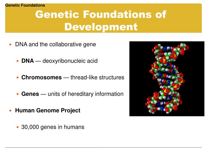 Genetic Foundations