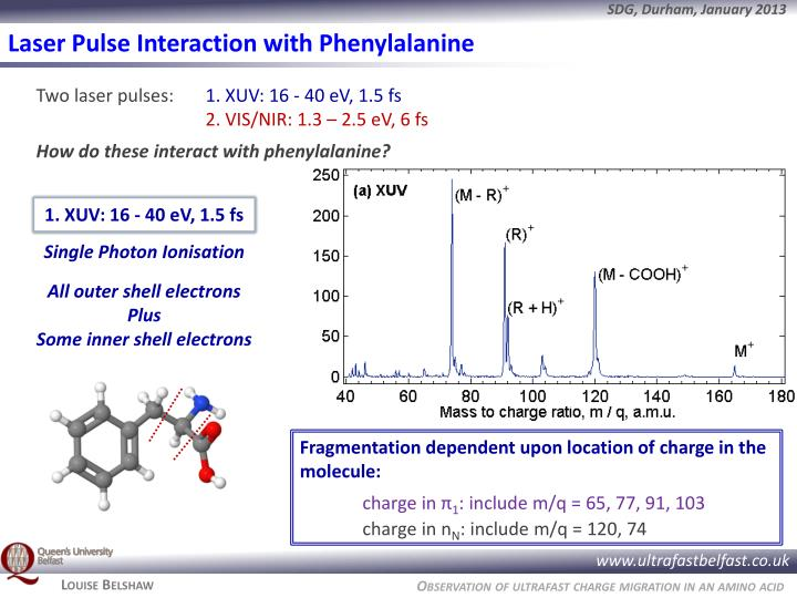 Laser Pulse Interaction with Phenylalanine