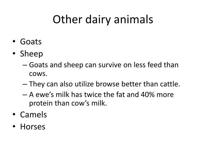 Other dairy animals