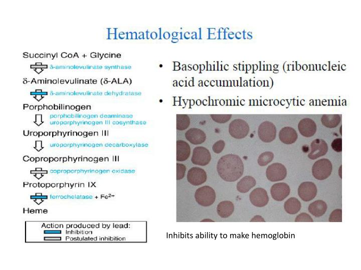 Inhibits ability to make hemoglobin