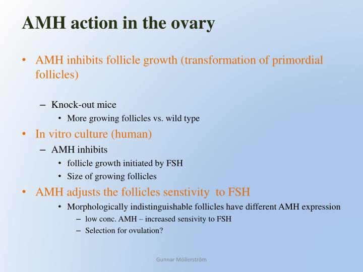 AMH action in the ovary