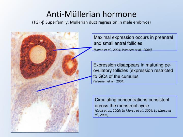 Anti-Müllerian hormone
