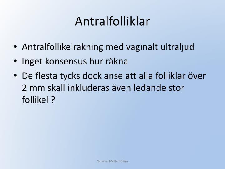 Antralfolliklar