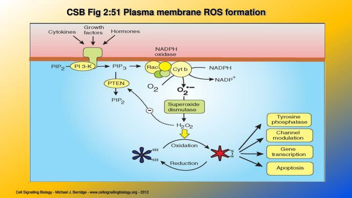 CSB Fig 2:51 Plasma membrane ROS formation