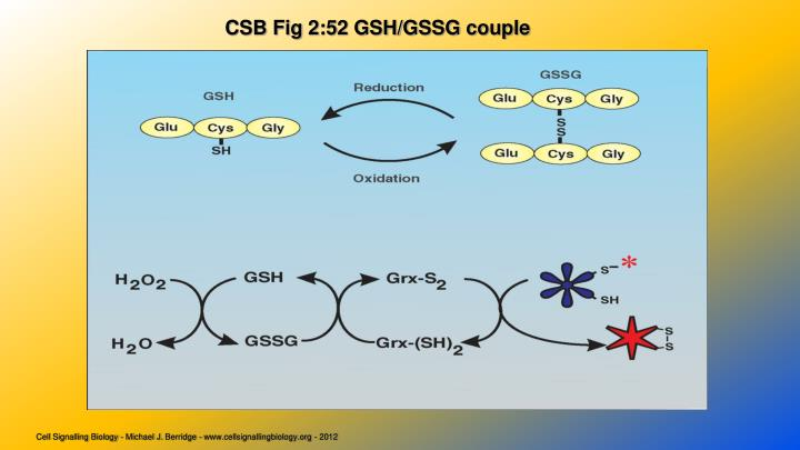 CSB Fig 2:52 GSH/GSSG couple