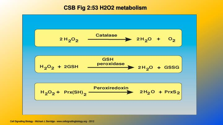 CSB Fig 2:53 H2O2 metabolism
