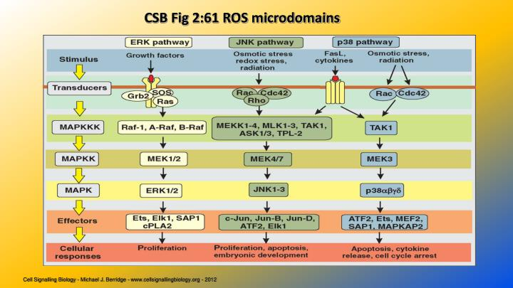 CSB Fig 2:61 ROS microdomains