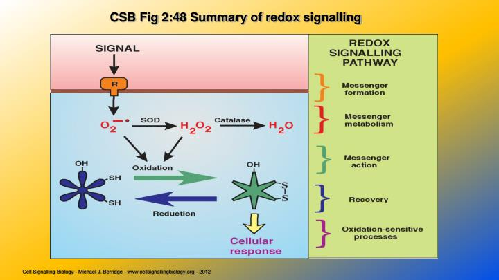 CSB Fig 2:48 Summary of redox