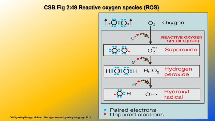 CSB Fig 2:49 Reactive oxygen species (ROS)