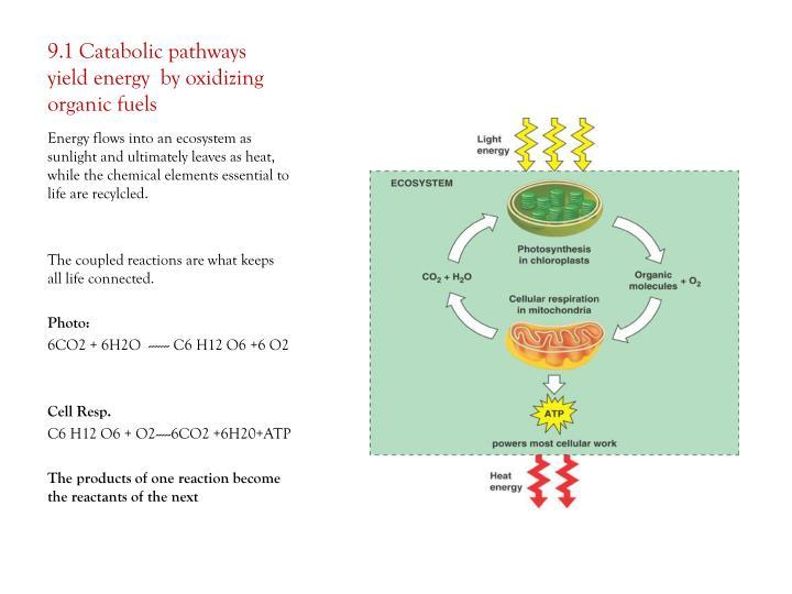 9.1 Catabolic pathways yield energy  by oxidizing organic fuels
