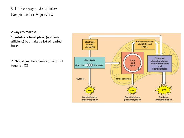 9.1 The stages of Cellular Respiration : A preview