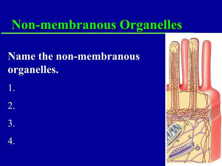 Non-membranous Organelles