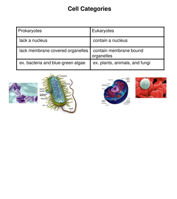 Cell Categories
