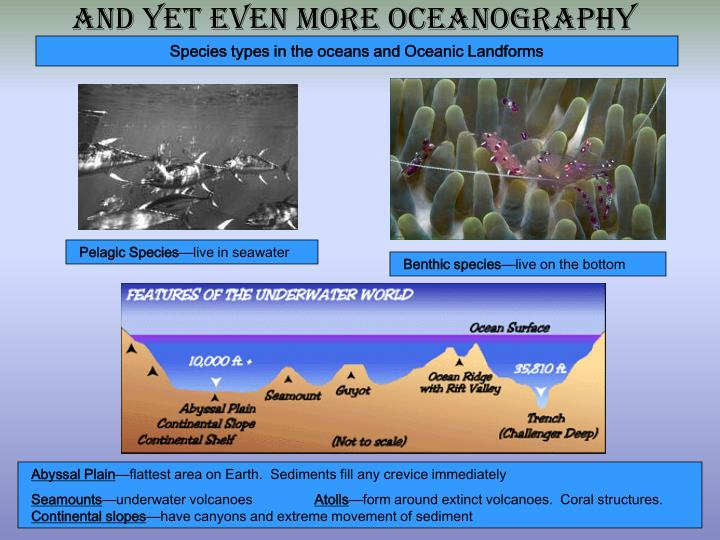 Species types in the oceans and Oceanic Landforms