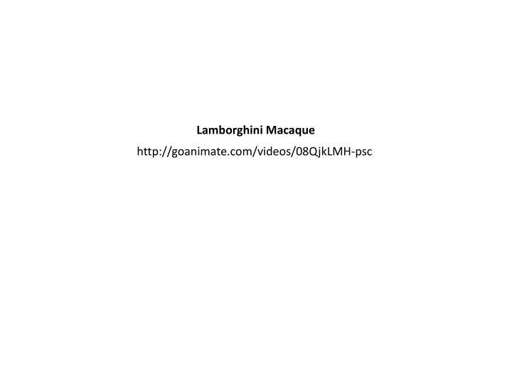 Lamborghini Macaque