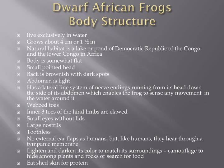 Dwarf African Frogs