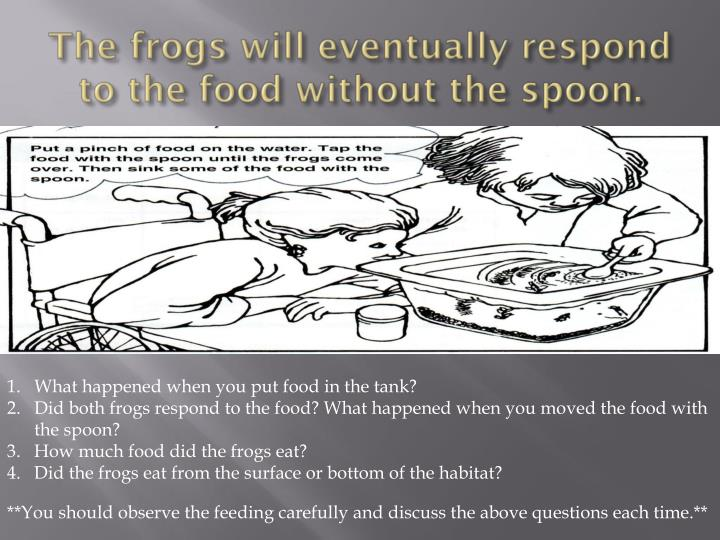 The frogs will eventually respond to the food without the spoon.