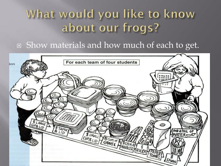 What would you like to know about our frogs?