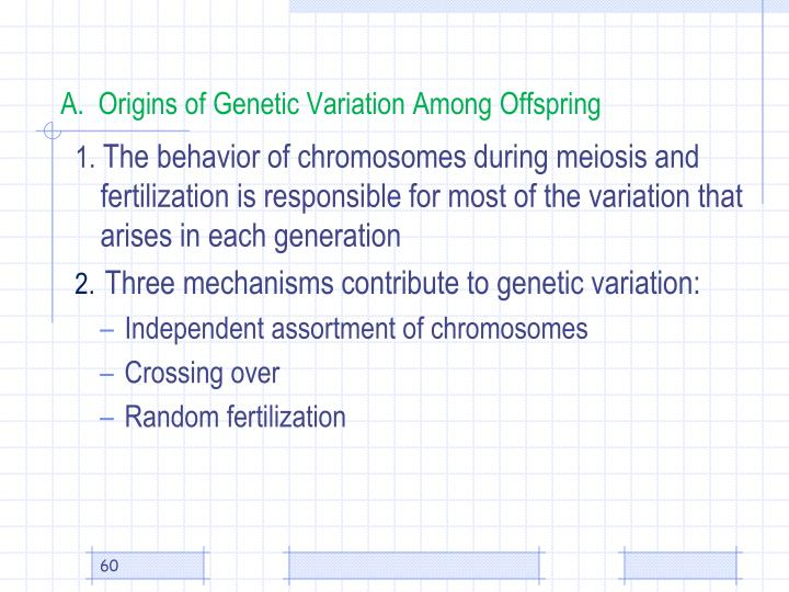 A.  Origins of Genetic Variation Among Offspring
