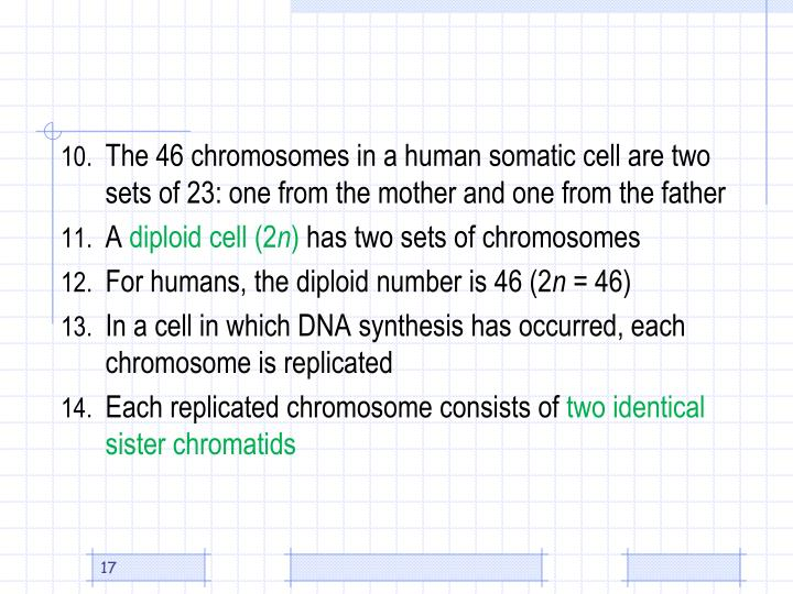 The 46 chromosomes in a human somatic cell are two sets of 23: one from the mother and one from the father