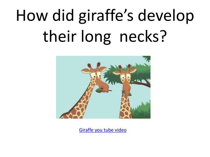 How did giraffe's develop their long  necks?