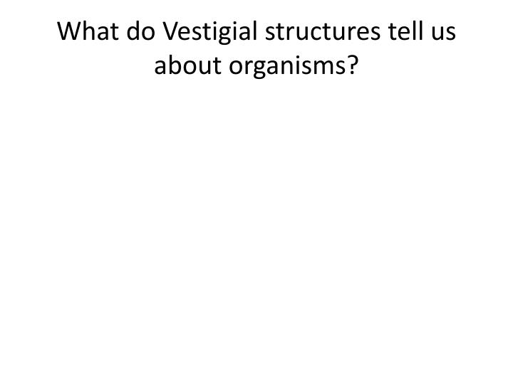 What do Vestigial structures tell us about organisms?